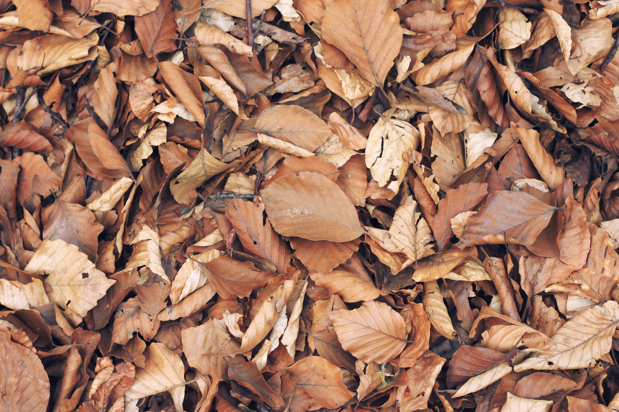 Autumn Leaves Forest Floor