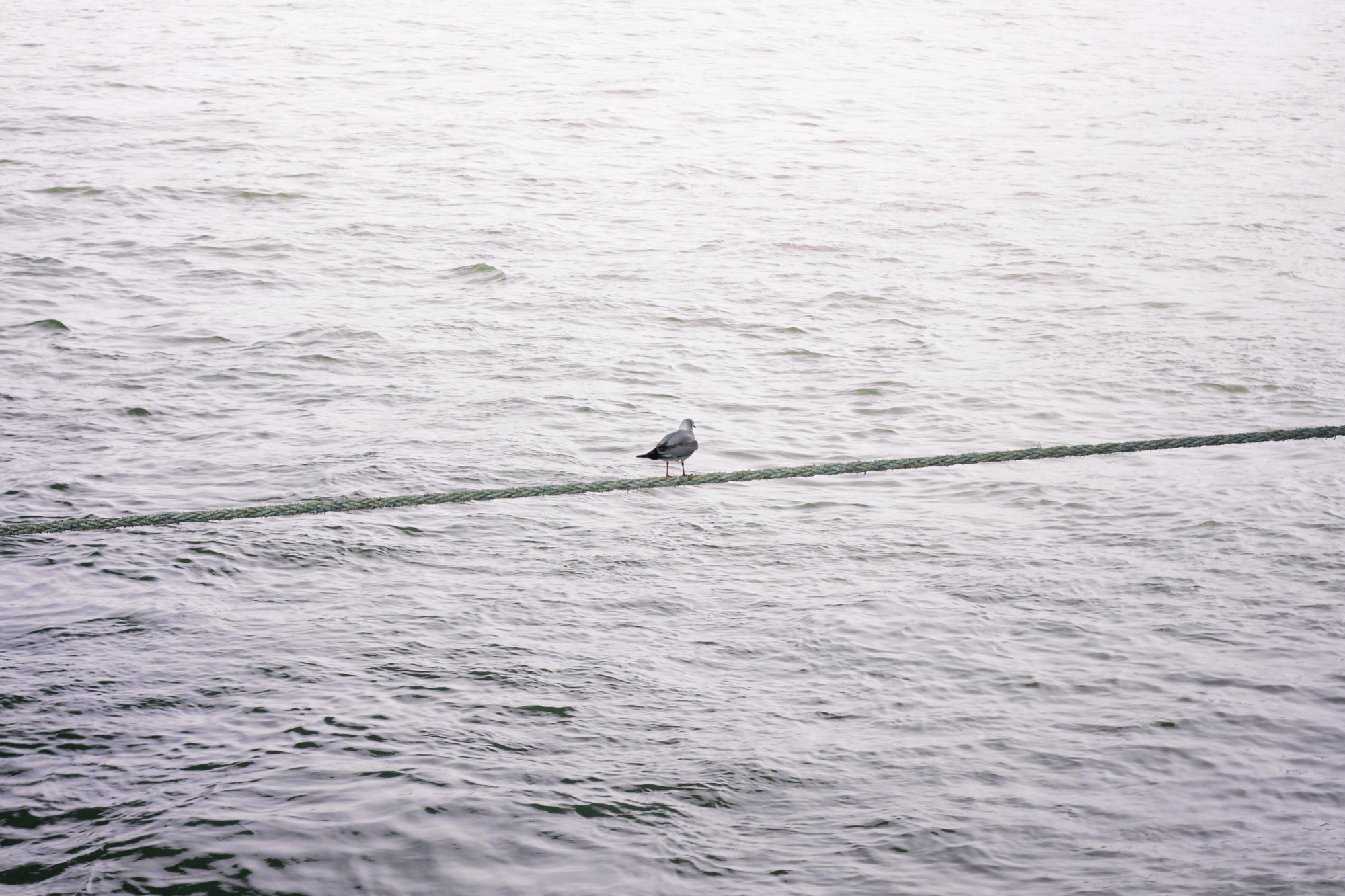 Seagull Rope