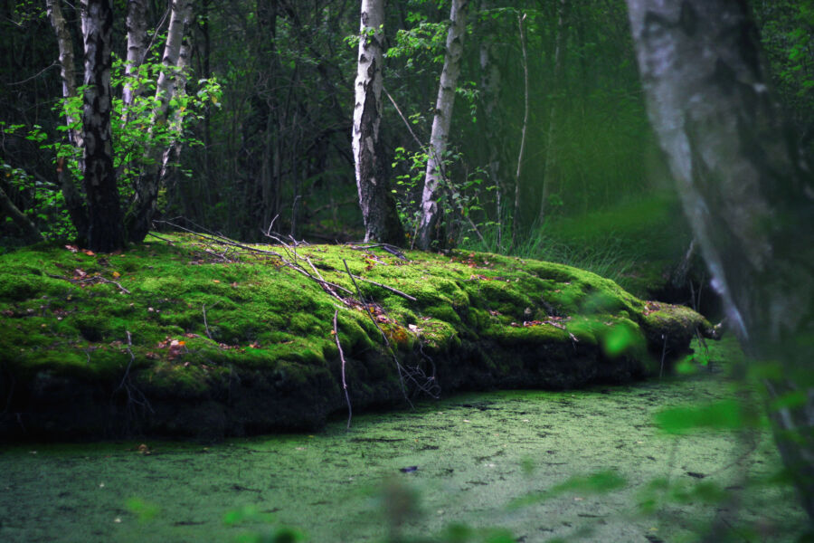 Waldbilder Wald Kostenlose Freie Bilder Download Titania Foto