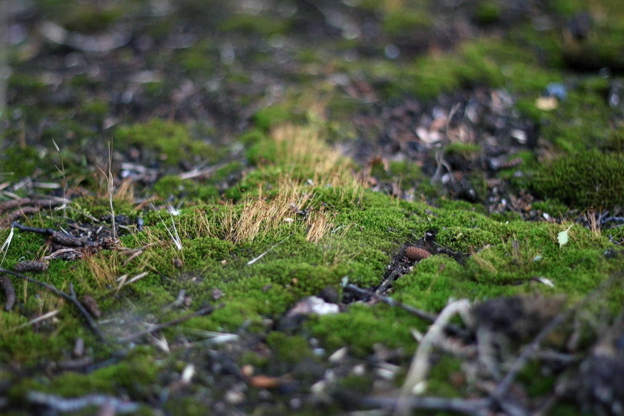 Moos Waldboden