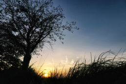 Natur Sonnenuntergang