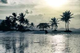 Palmen Strand Abend