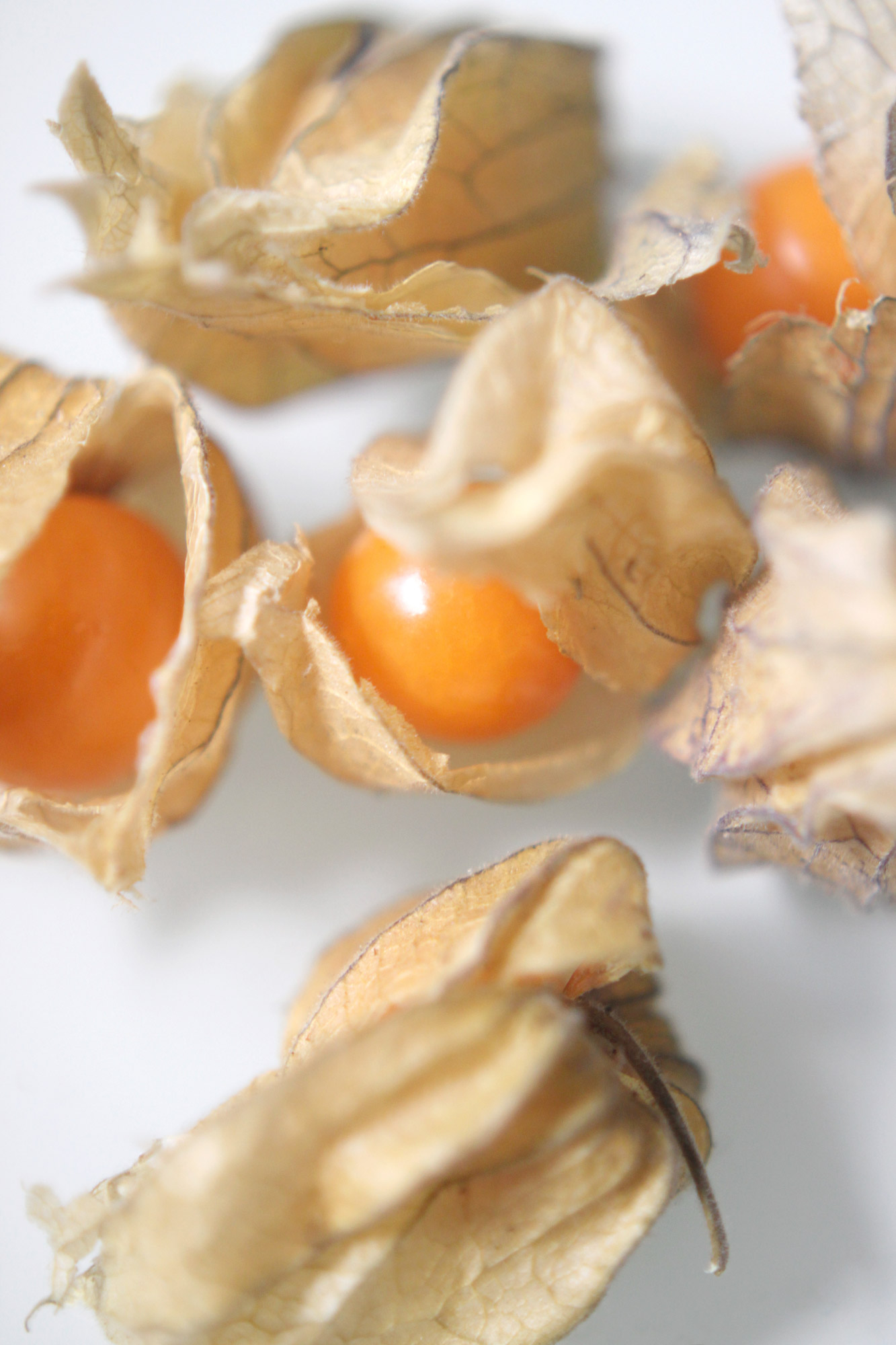 Physalis Kapstachelbeeren