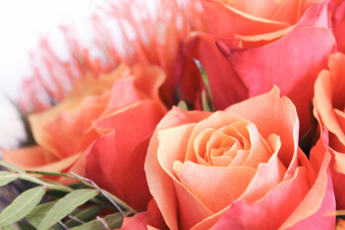Blumenbilder Blumen Kostenlose Bilder Herunterladen Titania Foto