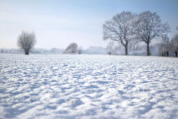 Schneelandschaft Feld