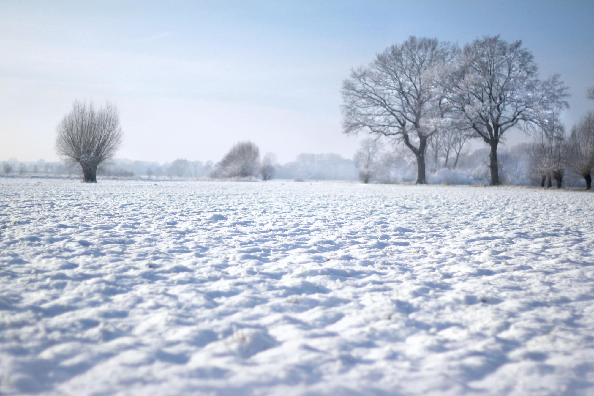 Snowscape Field