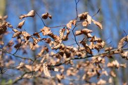 Trockene Blätter Herbst