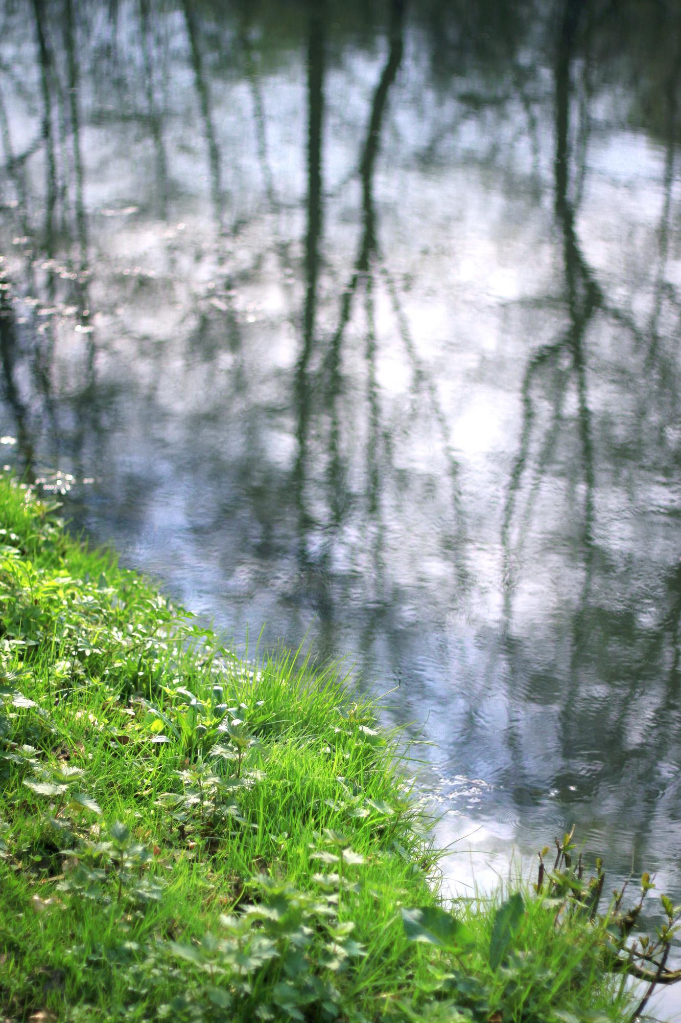 Ufer Gras
