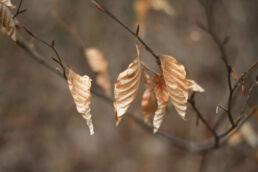 Vertrocknete Blätter Herbst