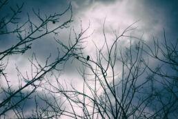 Vögel Bäume Winter