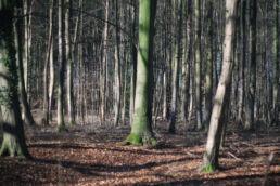 Wald Baumstämme