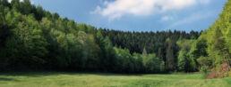 Waldrand Wald