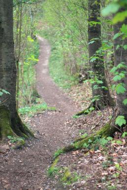 Waldweg Wanderweg
