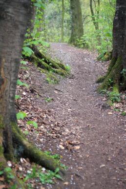 Wanderweg Waldweg