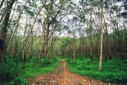 Weg Bäume