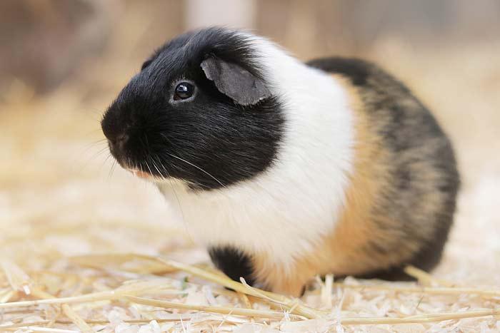 Tierbilder Tiere Kostenlose Bilder Download Titania Foto