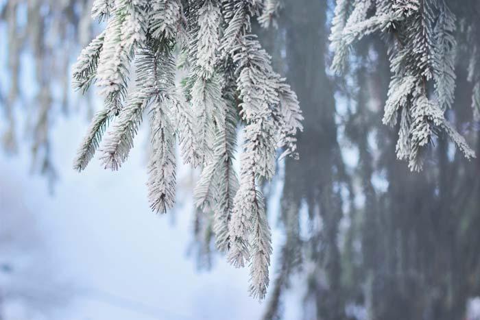 Winterbilder Winter Kostenlose Freie Bilder Download Titania Foto